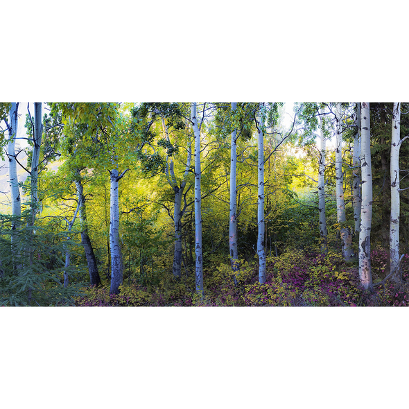 Forest Panorama - 3D Lenticular Postcard Greeting Card - Oversize