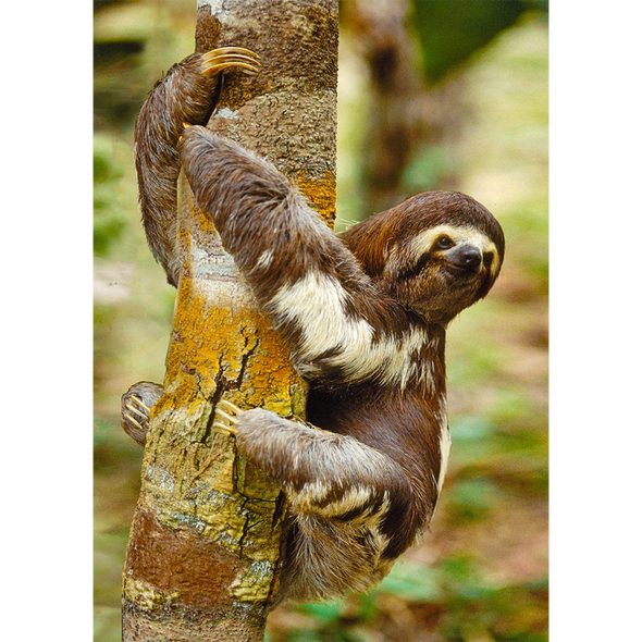 Three-toed Sloth - 3D Lenticular Postcard Greeting Card