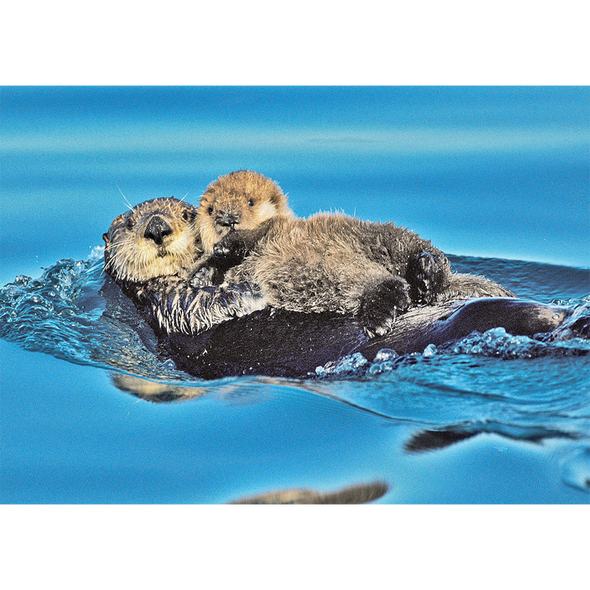 Sea Otter and pup - 3D Lenticular Postcard Greeting Card