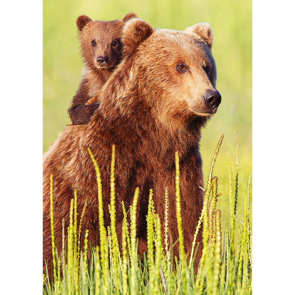Brown bear and cub - 3D Lenticular Postcard Greeting Card