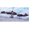 Seals and Otters on floating ice - 3D Action Lenticular Postcard Greeting Card - Oversize