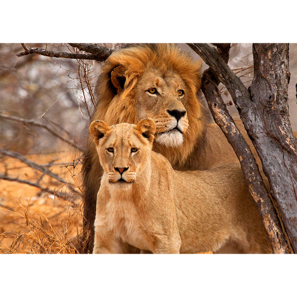 Lion and Lioness - 3D Lenticular Postcard Greeting Card