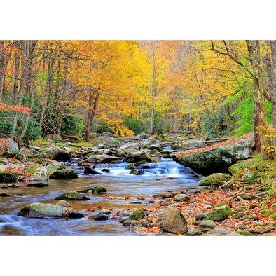 Appalachian River in Autumn - 3D Lenticular Postcard Greeting Card