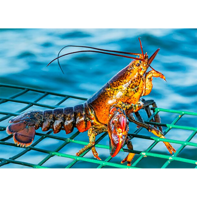 AMERICAN LOBSTER - 3D Lenticular Postcard Greeting Card