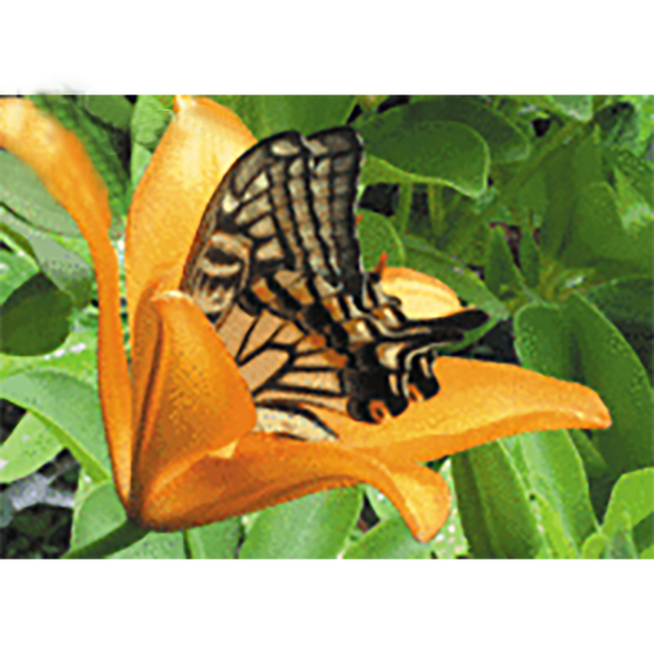Butterfly in Lily - 3D Lenticular Postcard Greeting Card