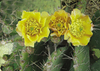 Cactus Flower - 3D Lenticular Postcard Greeting Card