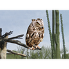 Owl - 3D Lenticular Postcard Greeting Card