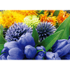 Flowers - 3D Lenticular Postcard Greeting Card