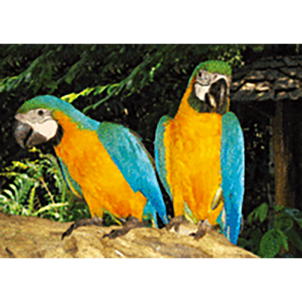 Blue wing yellow chest Macaw - 3D Lenticular Postcard Greeting Card