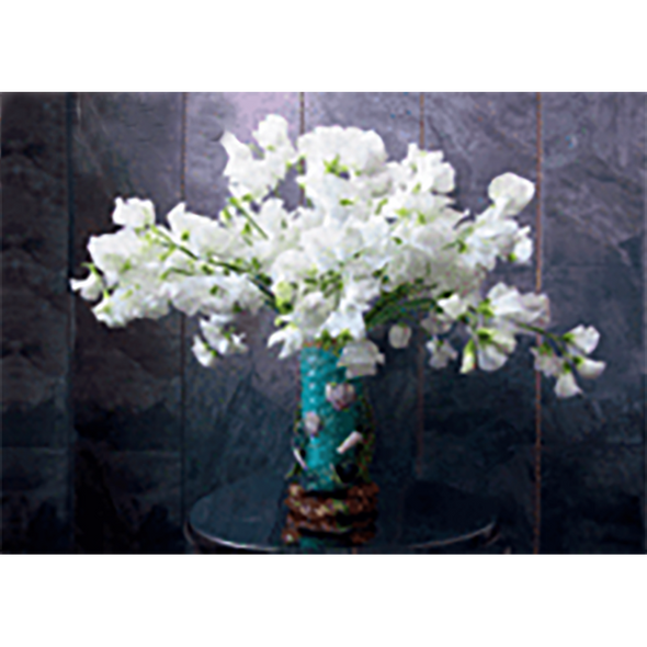 White VETCHES Flowers - 3D Lenticular Postcard Greeting Card