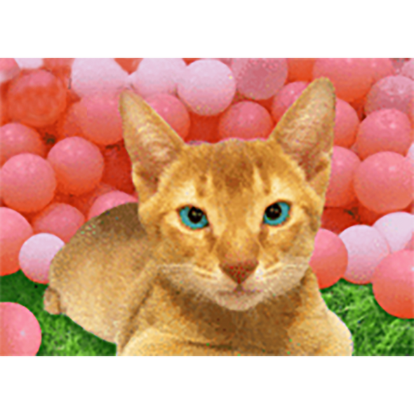 Smiling Cat - 3D Action Lenticular Postcard Greeting Card