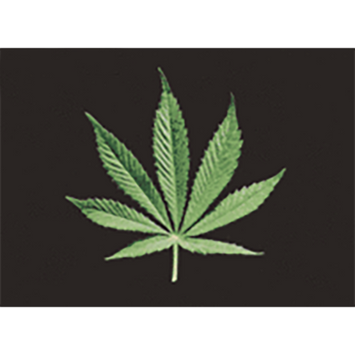 Marijuana - From Leaf to Joint - 3D Action Lenticular Postcard Greeting Card