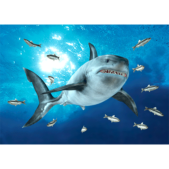Great White Shark - 3D Action Lenticular Postcard Greeting Card