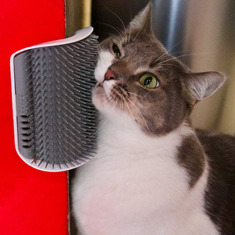 Cat Corner Self Grooming Brush
