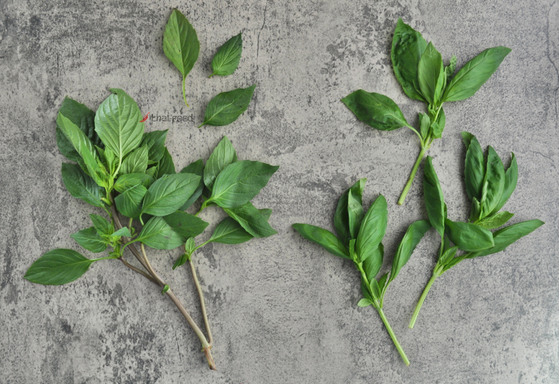 Thai Sweet Basil vs. Genovese Basil: (Comparison With Photos)