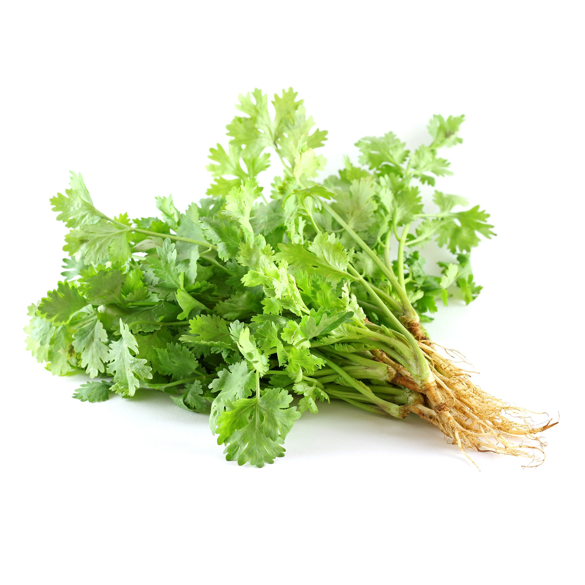 Fresh Thai coriander root (100g) - Imported weekly from Thailand