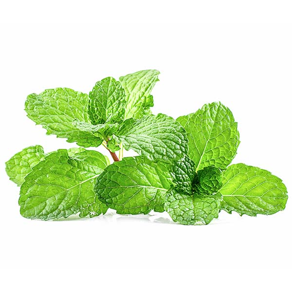 Fresh Thai mint (peppermint) - Imported weekly from Thailand