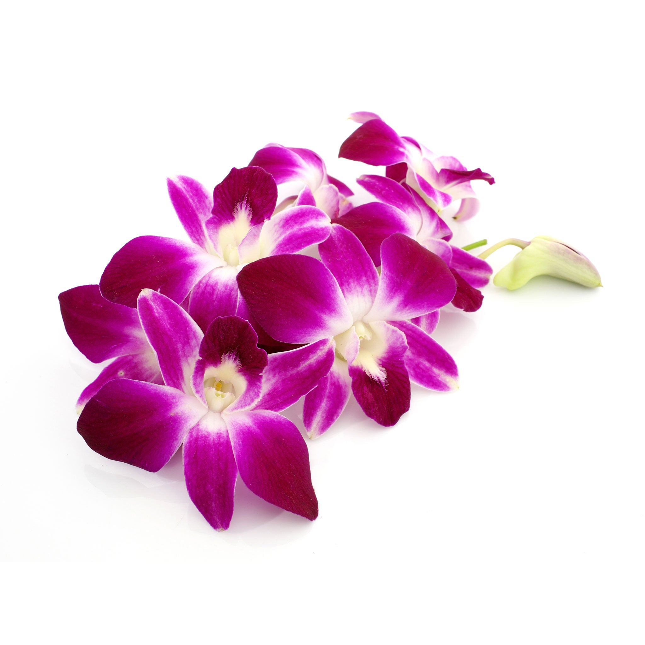 Fresh Thai orchid flowers
