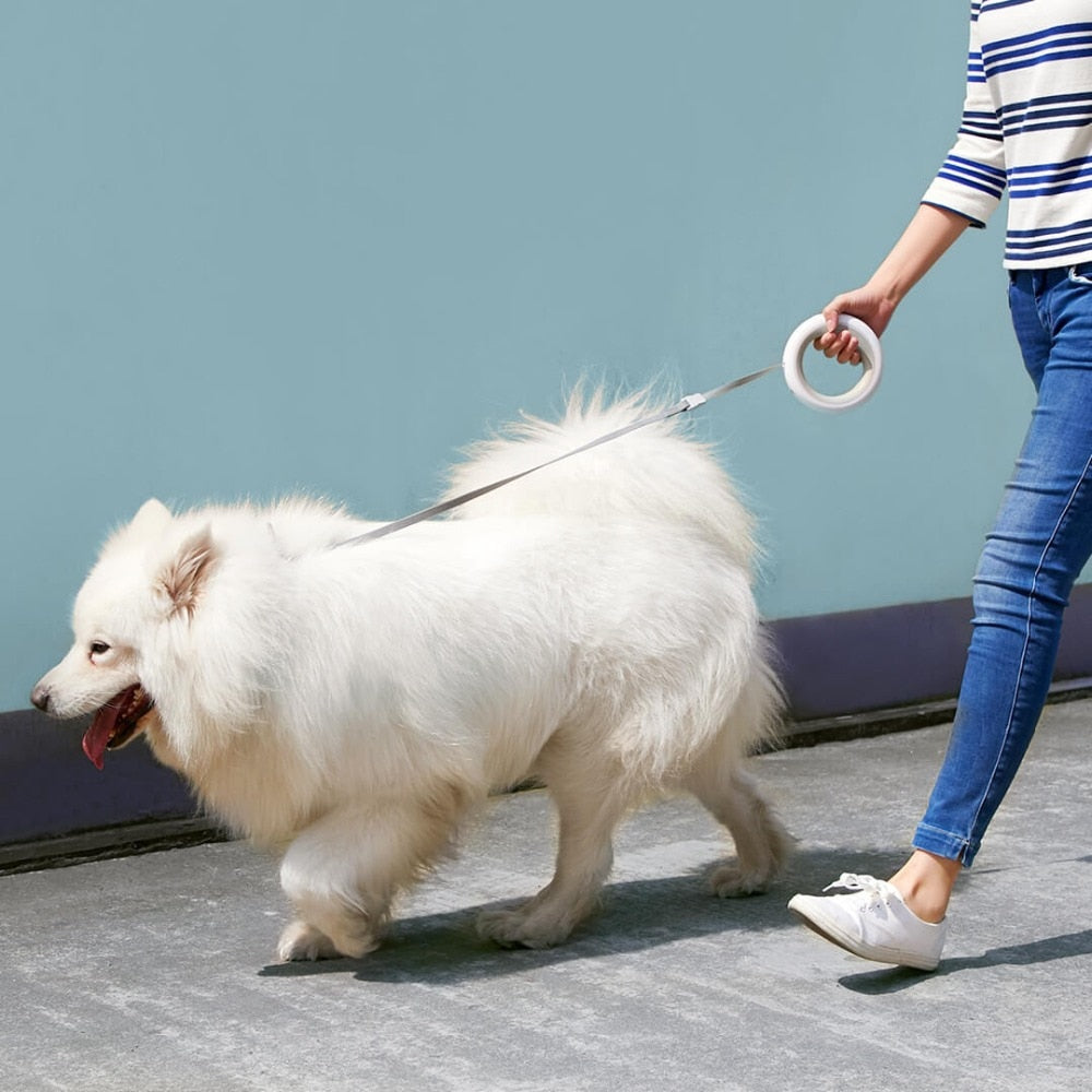 Led lighting  Dog Leash  2.6M Smart Remote