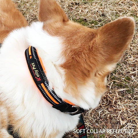Dog Leash Rope Personalized Dog Collar