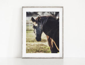 Lisa Russo Fine Art Farmhouse and Rustic Decor Black Beauty <br>Horse Decor