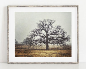 Lisa Russo Fine Art Farmhouse and Rustic Decor Foggy Oak <br>Texas Landscape Photography