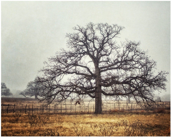 Lisa Russo Fine Art Farmhouse and Rustic Decor Foggy Oak Landscape