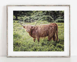 Lisa Russo Fine Art Farmhouse and Rustic Decor Highland Cow #1 - Glencoe, Scotland