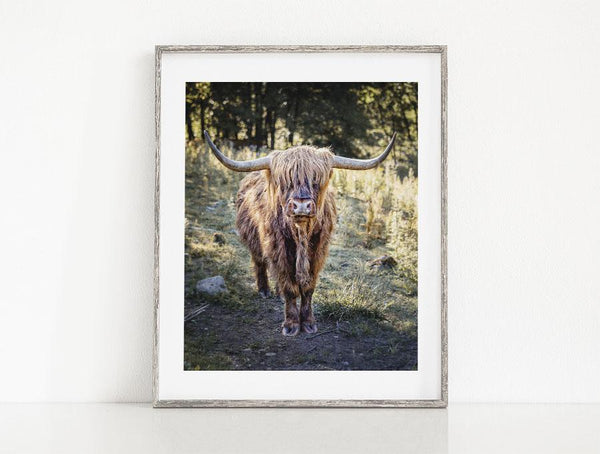 Lisa Russo Fine Art Farmhouse and Rustic Decor Highland Cow #2 - Fort Augustus, Scotland