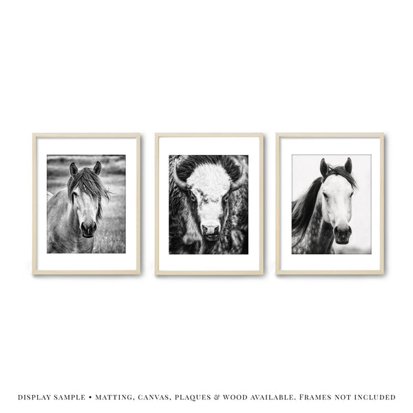Lisa Russo Fine Art Farmhouse and Rustic Decor Horse & Bison in Black & White • Set of 3