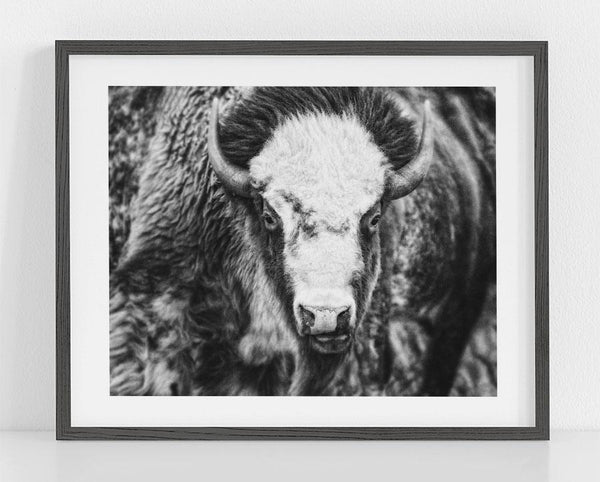 Lisa Russo Fine Art Farmhouse and Rustic Decor Kansas Bison <br>Black and White Bison Photograph