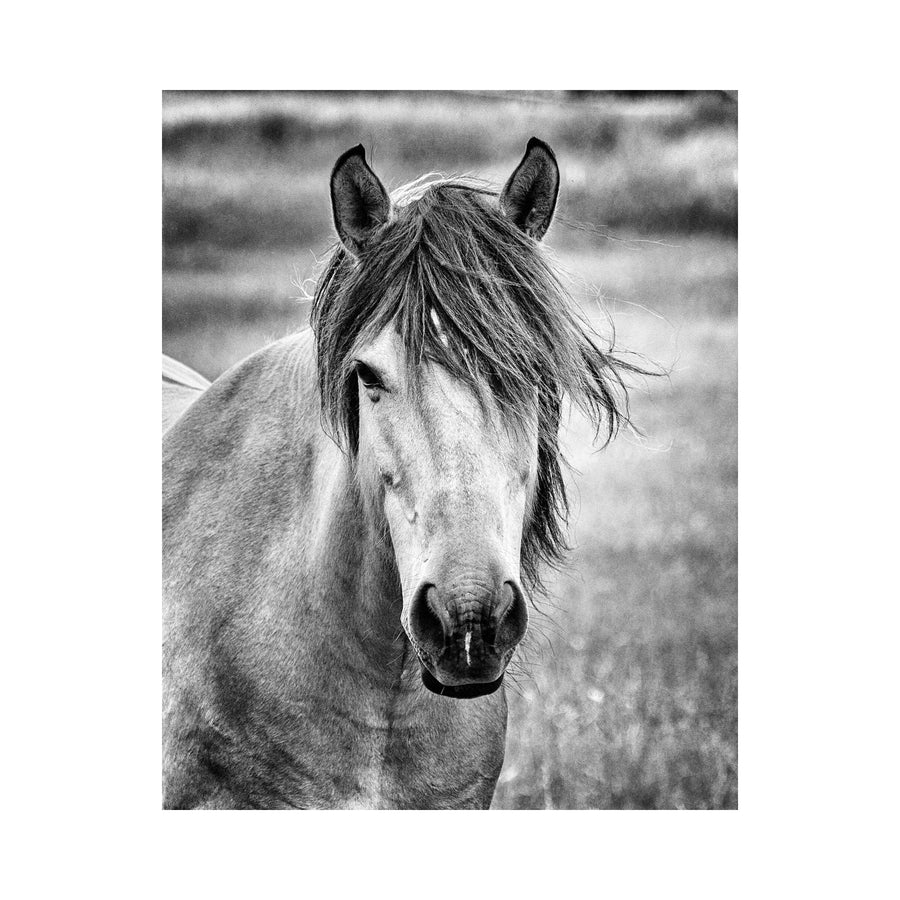 Lisa Russo Fine Art Farmhouse Decor The Mare in Black and White