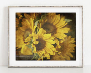 Lisa Russo Fine Art Floral Photography Country Sunflowers <br>Rustic Floral Decor