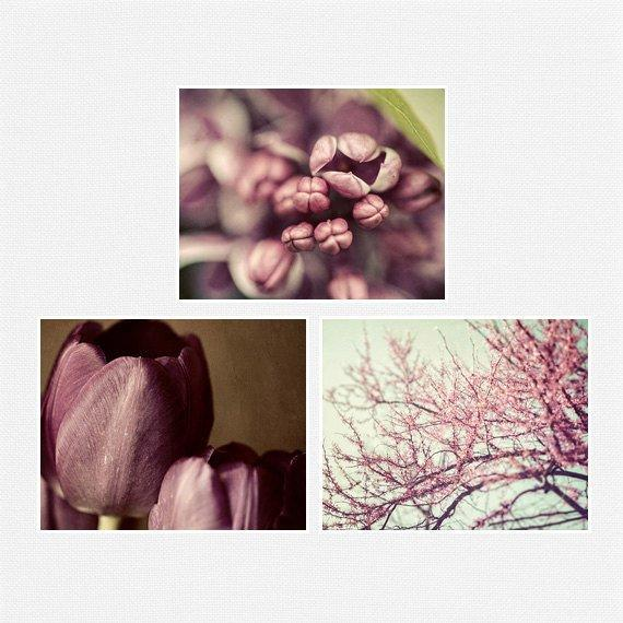 Lisa Russo Fine Art Floral Photography Purple & Pink Flowers • Set of 3