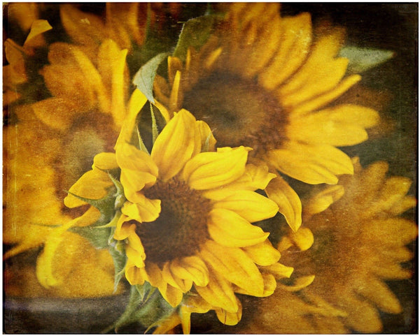Lisa Russo Fine Art Floral Photography Sunflowers • Country Rustic