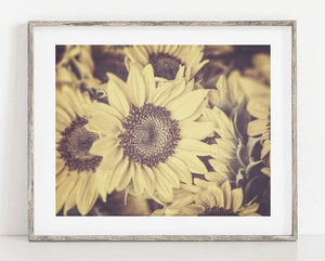 Lisa Russo Fine Art Floral Photography Sunflowers • Vintage