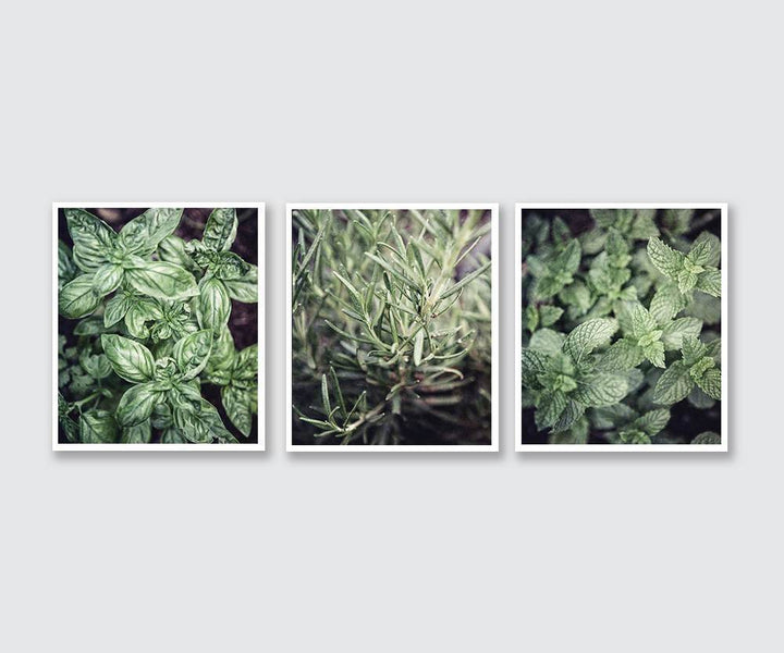 Lisa Russo Fine Art Kitchen Decor Green Kitchen Herbs • Set of 3