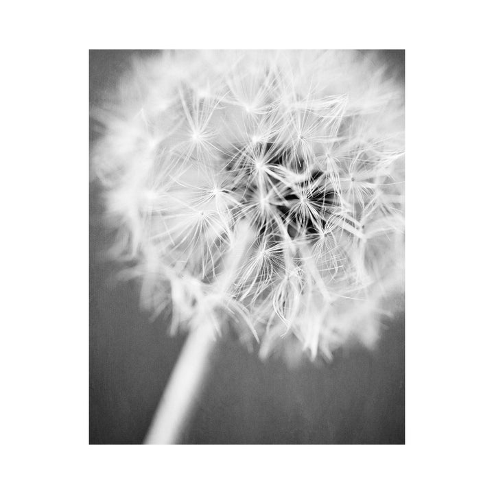 Lisa Russo Fine Art Nature Photography Black and White Dandelion