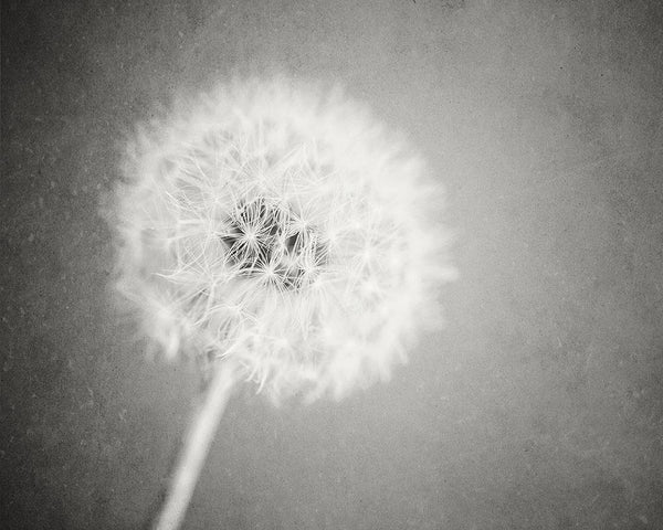 Lisa Russo Fine Art Nature Photography Blue Dandelion