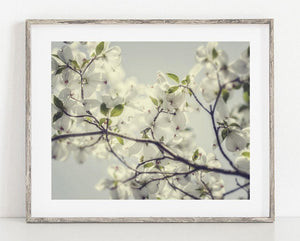 Lisa Russo Fine Art Nature Photography Blue Glow Dogwood <br>Shabby Chic Floral Decor