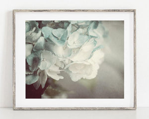 Lisa Russo Fine Art Nature Photography Blue Hydrangea