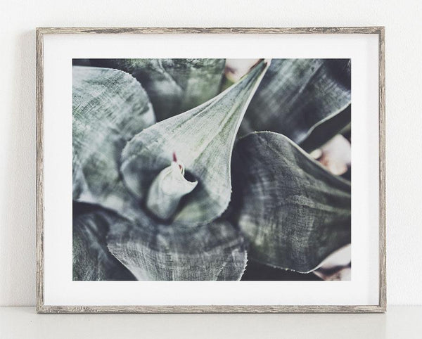 Lisa Russo Fine Art Nature Photography Boho Agave <br>Green Succulent Wall Art