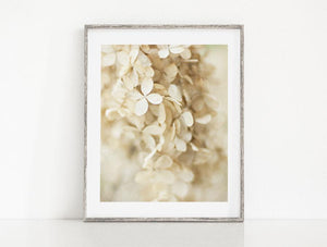 Lisa Russo Fine Art Nature Photography Botanical Ivory Hydrangeas <br>Shabby Chic Floral Decor