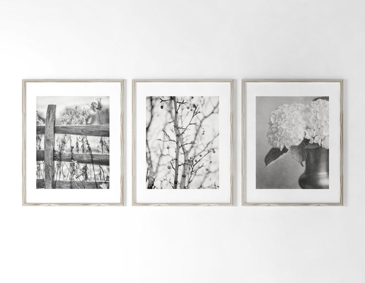 Lisa Russo Fine Art Nature Photography Cottage Nature in Black & White • Set of 3