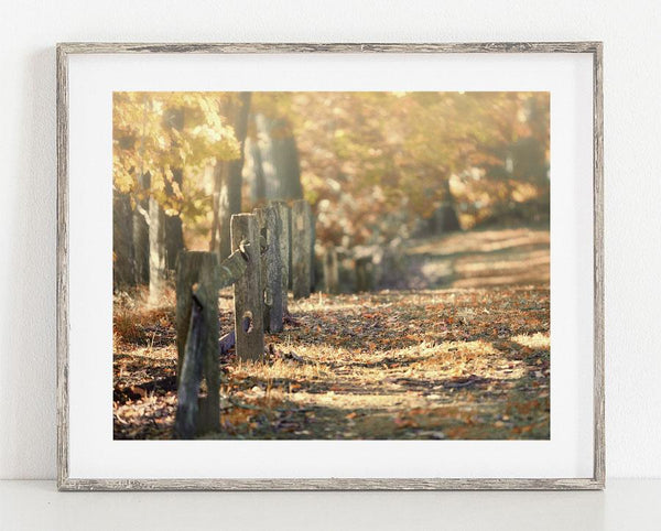 Lisa Russo Fine Art Nature Photography Fall Path <br>Edinboro Pennsylvania Landscape