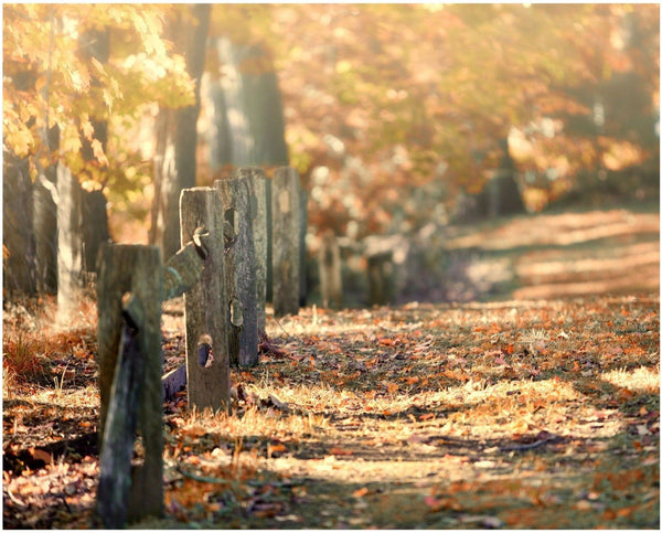 Lisa Russo Fine Art Nature Photography Fall Path