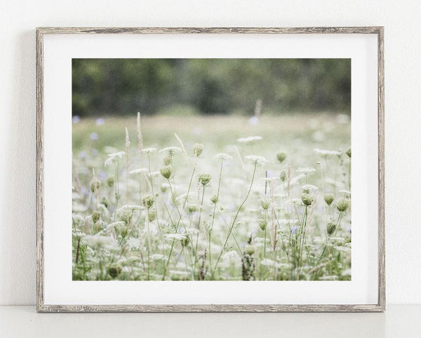 Lisa Russo Fine Art Nature Photography Field of Lace <br>Shabby Chic Floral Decor