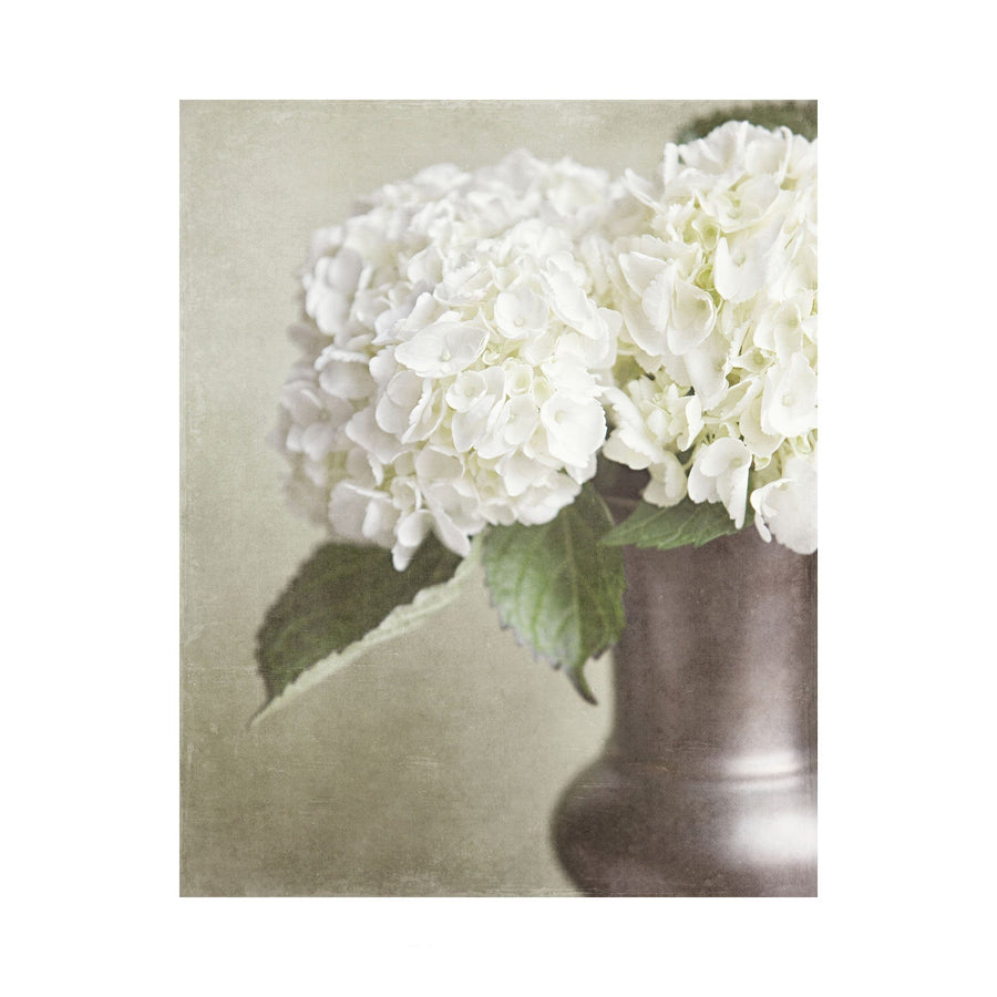 Lisa Russo Fine Art Nature Photography Ivory Hydrangeas
