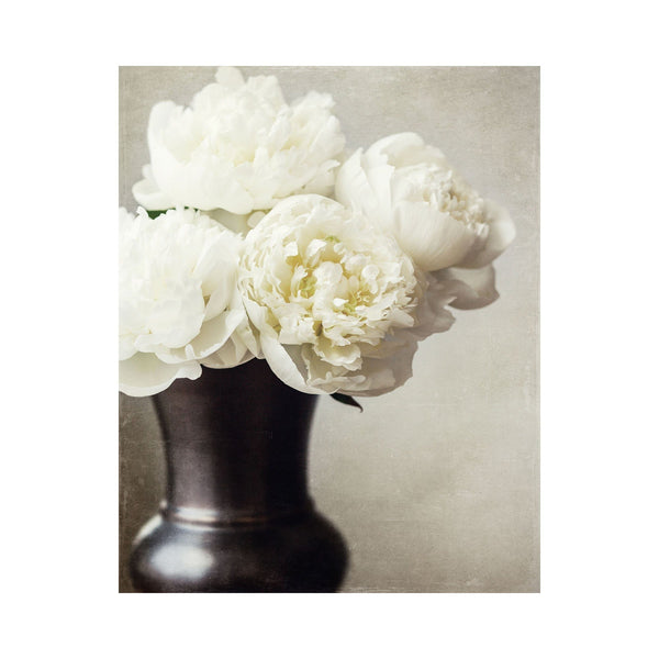 Lisa Russo Fine Art Nature Photography Ivory Peonies