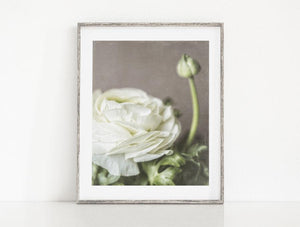 Lisa Russo Fine Art Nature Photography Ivory Ranunculus <br>Floral Wall Art